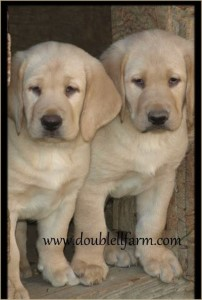 Double LL Labs